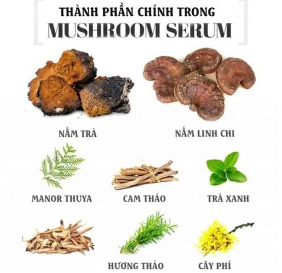 Thành phần mushroom serum