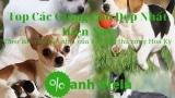 Top 5 Các Giống Chó Đẹp Nhất Những Loại Nhìn Chỉ Muốn Ẵm Ngay Về Nhà